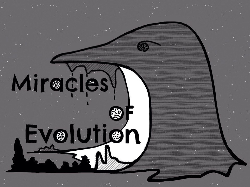 Концерт группы Miracles of Evolution