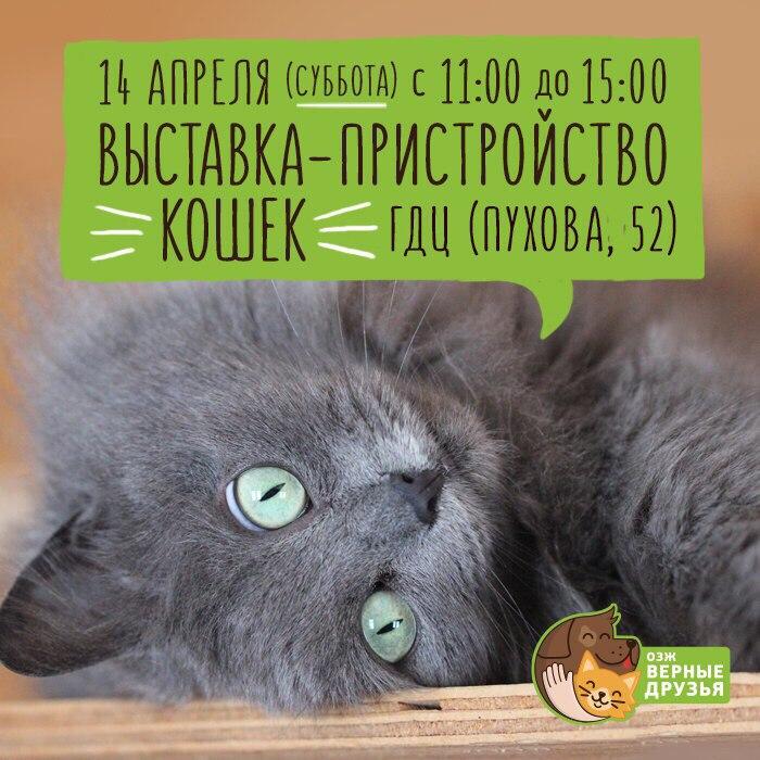 Выставка-пристройство кошек