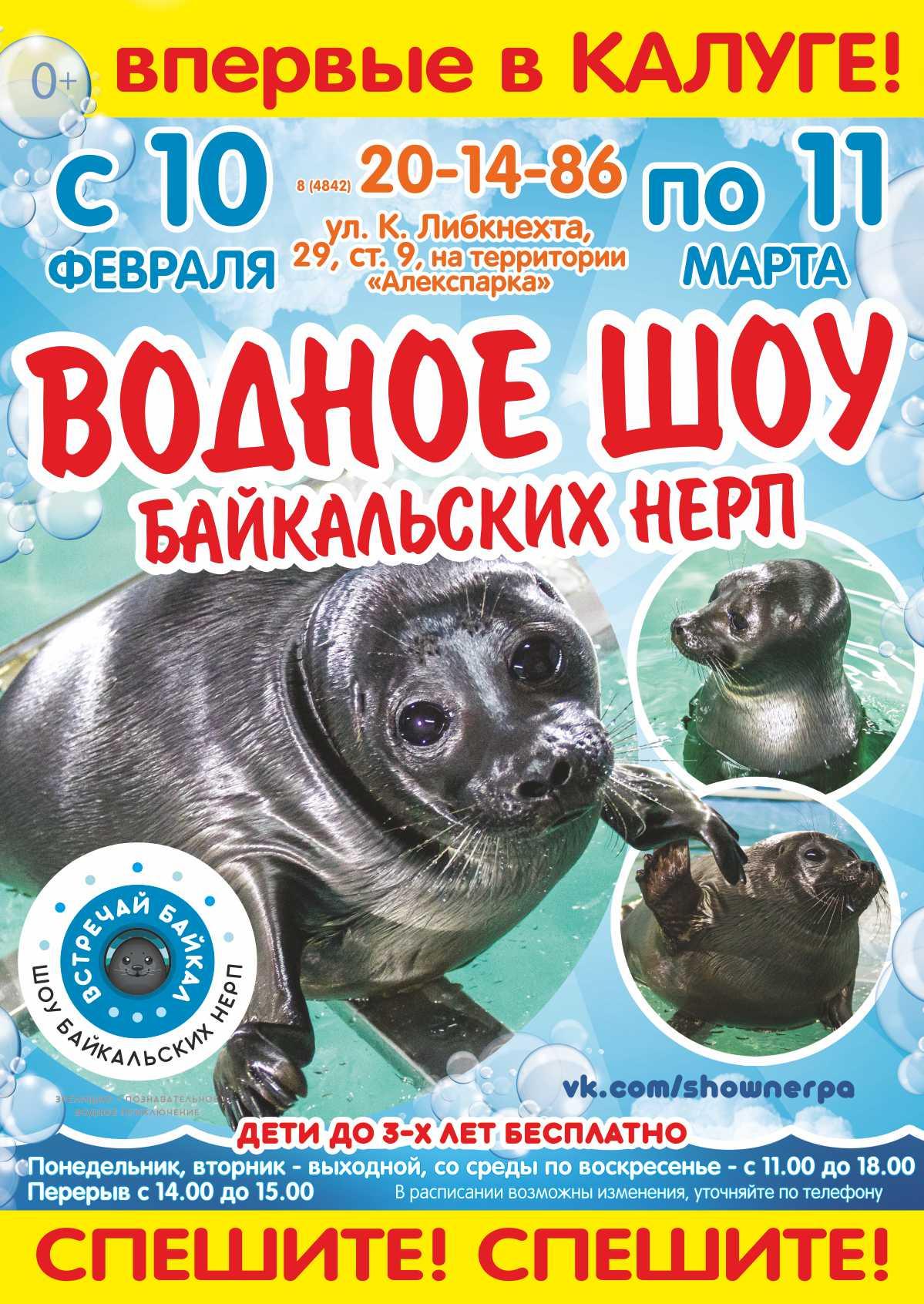 Шоу Байкальских Нерп